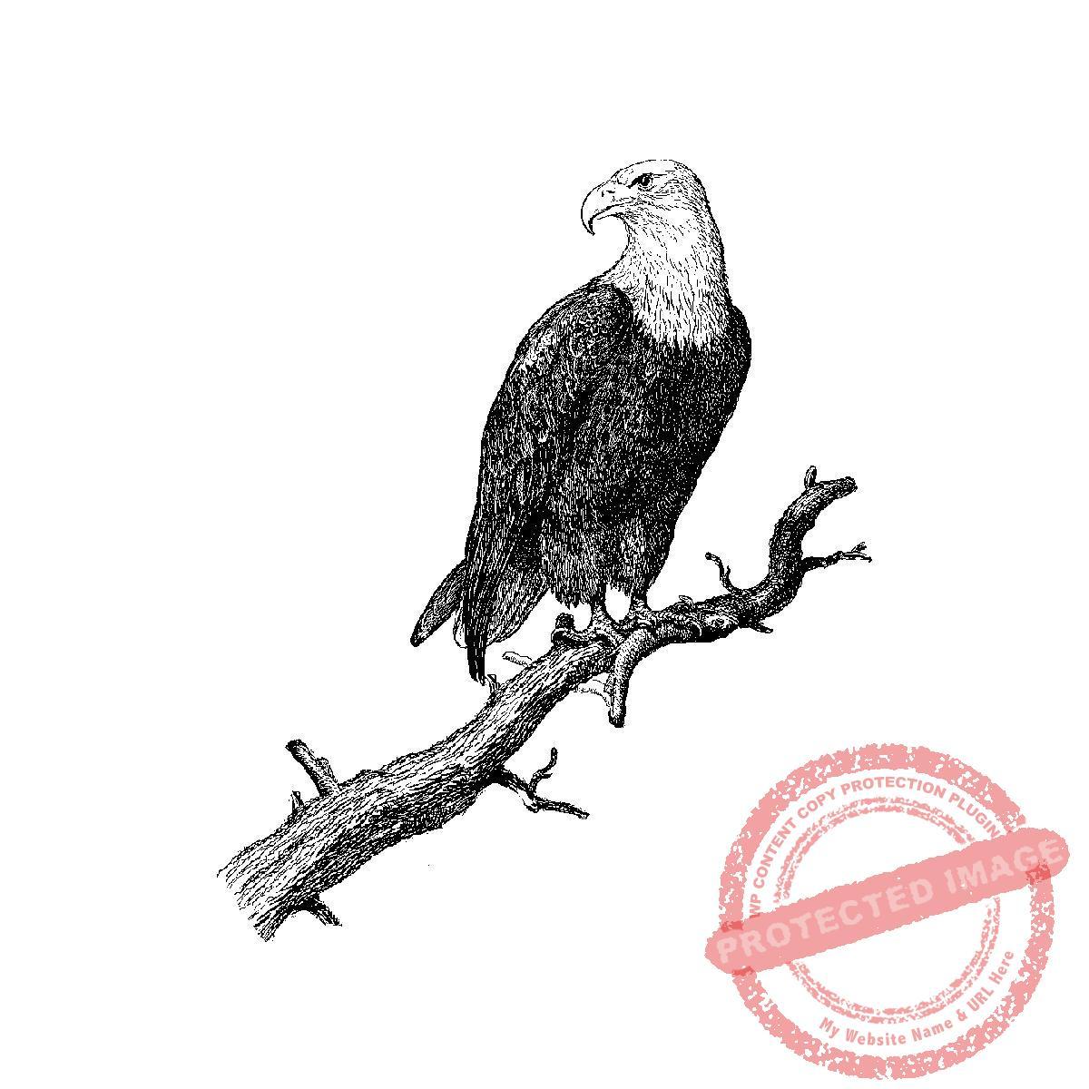 Eagle perched t12 282f